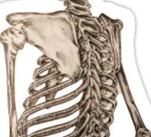 HUman Spine Sticker