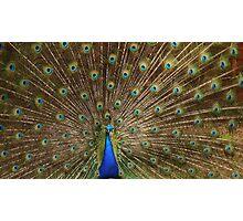 Fabulous peacock Photographic Print