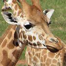 Giraffes - which way should we go? by georgiegirl