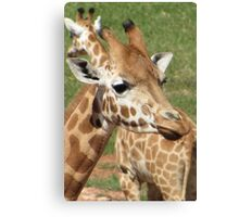 Giraffes - which way should we go? Canvas Print