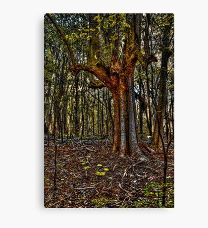 wingham brush Canvas Print