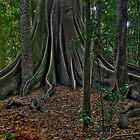 fig tree by gutto