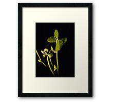 Adzuki Bean Shoots Framed Print
