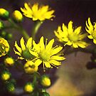 Antique flowers by Pirostitch