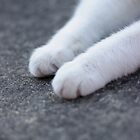 SNOW PAWS by andysax