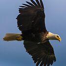 In Flight by Gary Lengyel