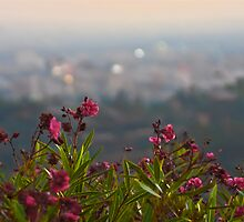 Los Angeles background by Merrian O. Lucando