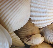 Shells 1 by Brent Rourk
