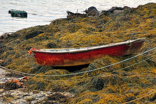Beals Island, Maine by fauselr