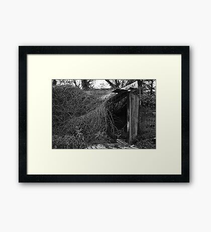 Nature Returns Framed Print