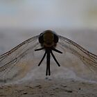 dragonfly photo 1 by Raina DeVaney