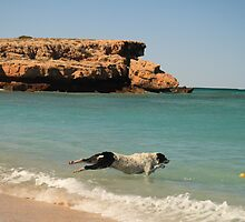 Louie can fly - Warroora Station, Maggies Beach WA Australia by cookieshotz