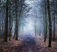 Alone in the woods by Craig  Roberts