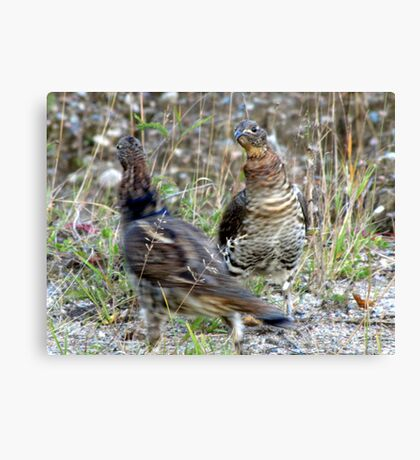 Lets do the Partridge Dance! Canvas Print