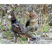 Lets do the Partridge Dance! Photographic Print