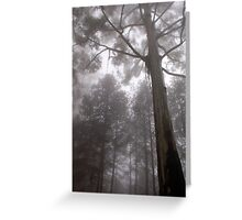 """IN """"MEMORY LANE"""" - A BLUE-GUM TREE in the mist Greeting Card"""