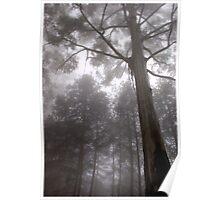"IN ""MEMORY LANE"" - A BLUE-GUM TREE in the mist Poster"
