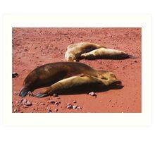 Galapagos Sea Lions Art Print