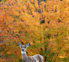 Autumn Deer by elasita