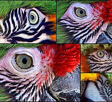 A Collage Of Eyes by Clive