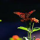 As gentle as a butterfly by Phillip M. Burrow
