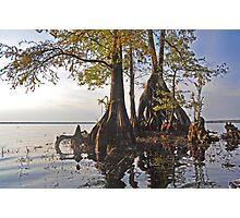 Surreal Cypress Photographic Print