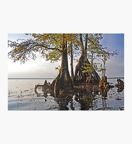 Surreal Cypress Photographic Print