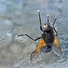 Funny orange fly-Noon fly by sarnia2