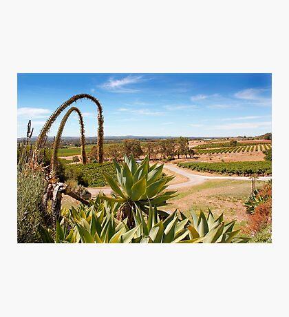 Barossa Landscape Photographic Print