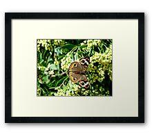 Beauty & Design in Nature Framed Print