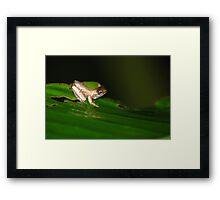 Froglet - Costa Rica Framed Print