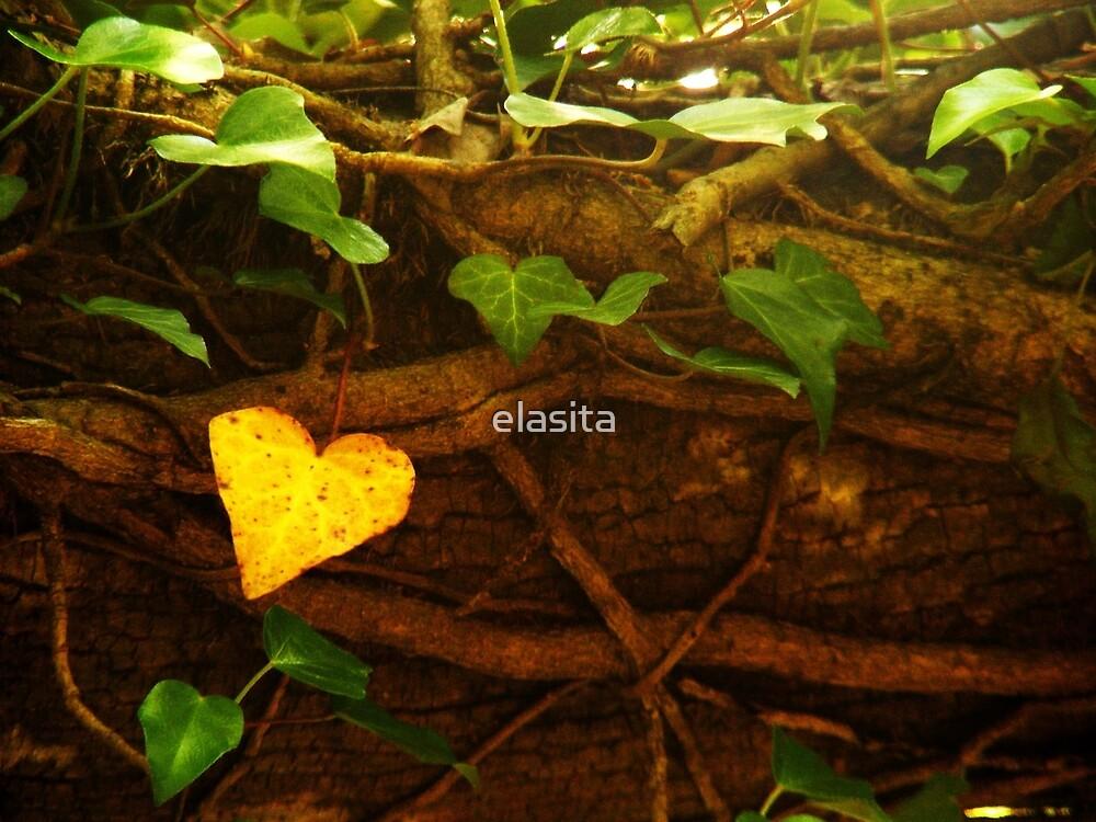 Nature's heart by elasita