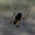 Just a little Spider by Rick Playle