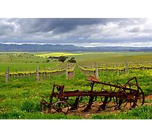 Springtime on the Vines Photographic Print
