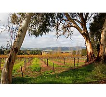 Barossa Autumn Photographic Print