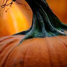 Stemming from a Pumpkin  by laruecherie