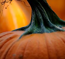 Stemming from a Pumpkin  by laruecherie