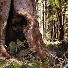 A Walpole Tree by Eve Parry