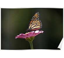 Monarch and Pink Flower Poster