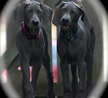 Luna and Boscoe by creativegenious