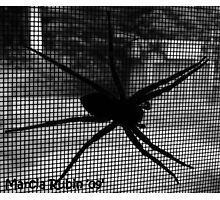 Boris the Spider Photographic Print