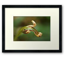 new life in the forest Framed Print