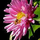 FP and The Bee by Patty Boyte