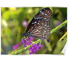 Butterfly With Purple Flowers Poster