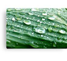 Green waterdrop  Canvas Print