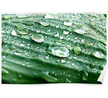 Green waterdrop  Poster