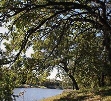 Under The Giant Spreading Oak Trees by kkphoto1