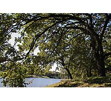 Under The Giant Spreading Oak Trees Photographic Print