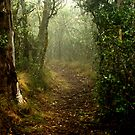 a secret path in a misty forest by Clare Colins