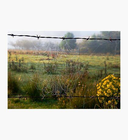 Delicately Woven Photographic Print
